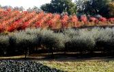 Umbrischer Herbst